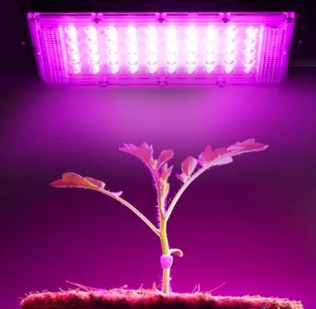 50W LED svìtlo s plným spektrem èipu 220V fyto lampa pro rostliny